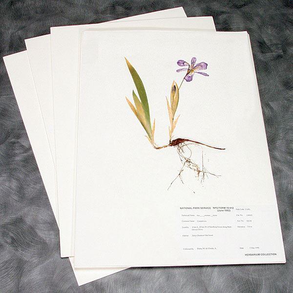 Herbarium Mounting Paper 100 Rag Preservation